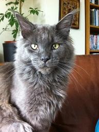 Jasper the lost cat