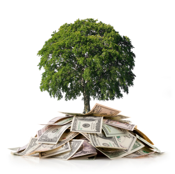 MMM Money tree image